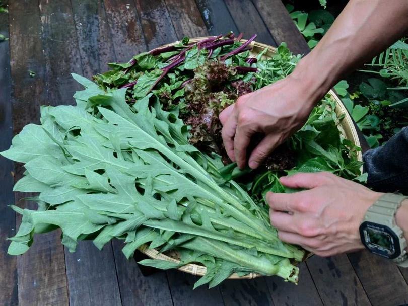 「聚落山海」的野菜以自然農法栽種,且獲得國際MOA有機認證。(圖/聚落山海)