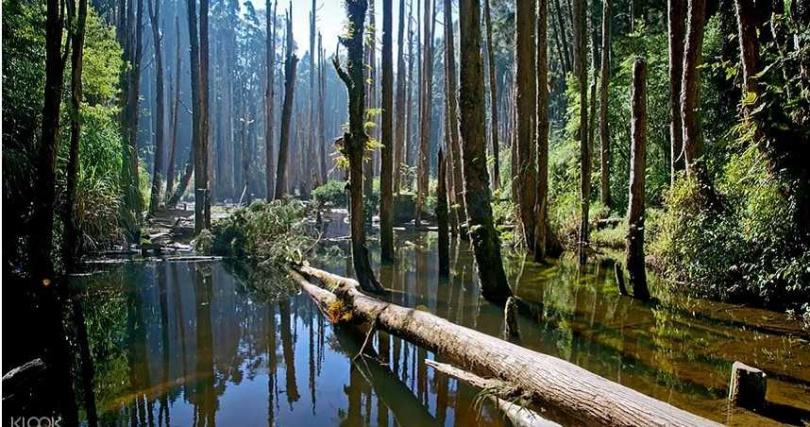 到南投杉林溪,投入山林的清幽吸收芬多精。(圖/KLOOK提供)