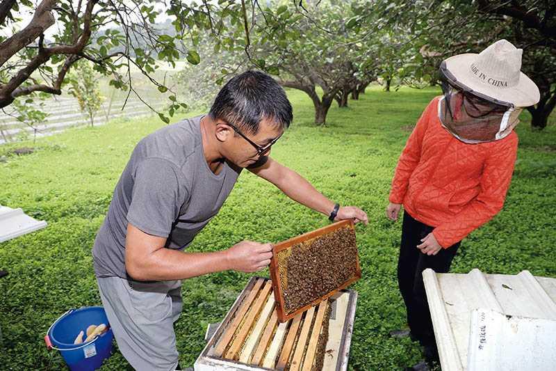在「宇還地」養蜂場體驗採蜂蜜,用力抖下蜜蜂後,再取出蜂巢(500元/人)。(圖/施岳呈攝影)