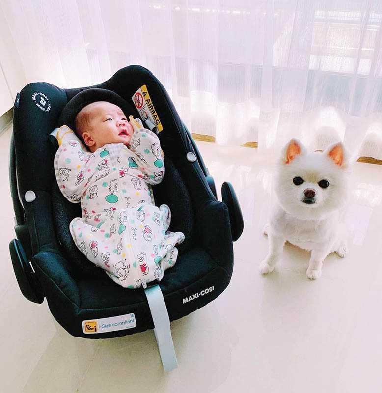 自從生下女兒,JR明顯察覺棉花糖有失落感,但棉花糖有時也會在寶寶旁邊好奇地東看西看,似乎想接觸「妹妹」。(圖/翻攝自臉書)