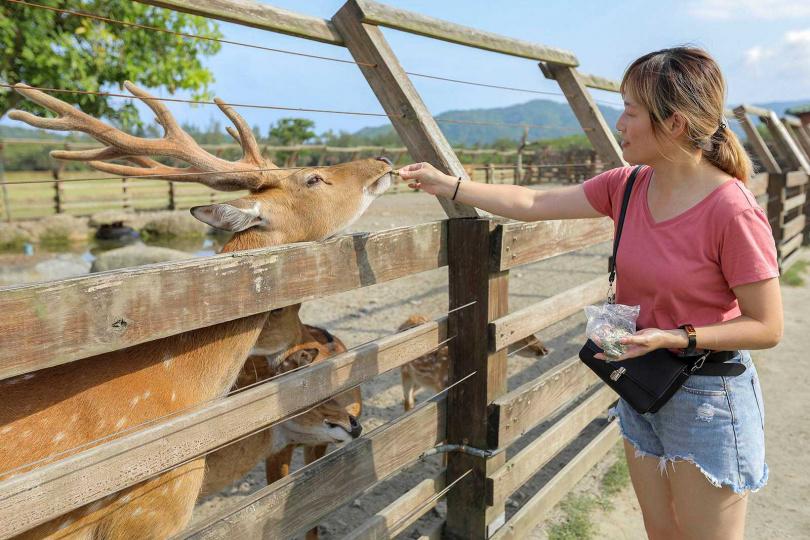 喜愛動物的遊客來到「台開心農場」,可向工作人員購買飼料餵養梅花鹿。(飼料50元/包、100元/3包)(圖/林士傑攝)