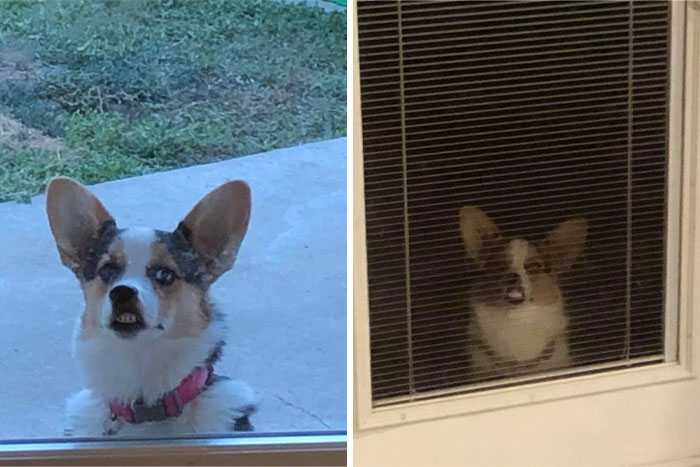 圖片來源:Disapproving Corgis