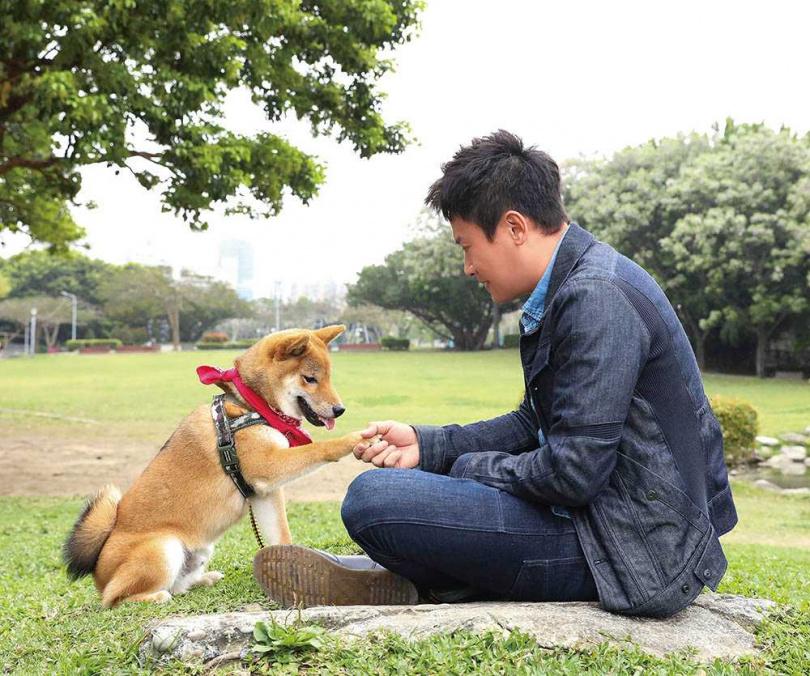 為培養Debu的穩定性,王建復計畫將牠送到專門的寵物學校。(圖/戴世平攝)
