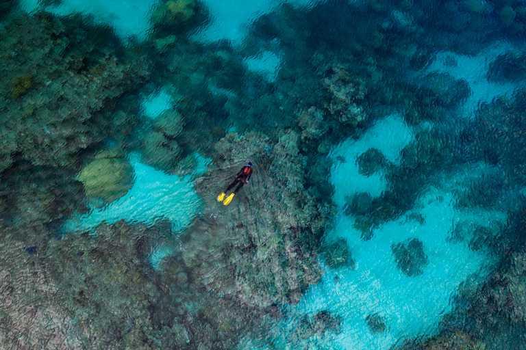 愛瑪.甘普(Emma Camp)在紀錄片中展示自己是如何在大堡礁上建造珊瑚苗圃,為保護全球其他脆弱珊瑚礁借鑑。(圖╱ROLEX提供)