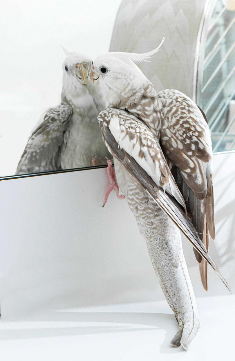 潘奕如不捨菊菊成為籠中鳥,在家中盡量放飛。(圖/林士傑攝)