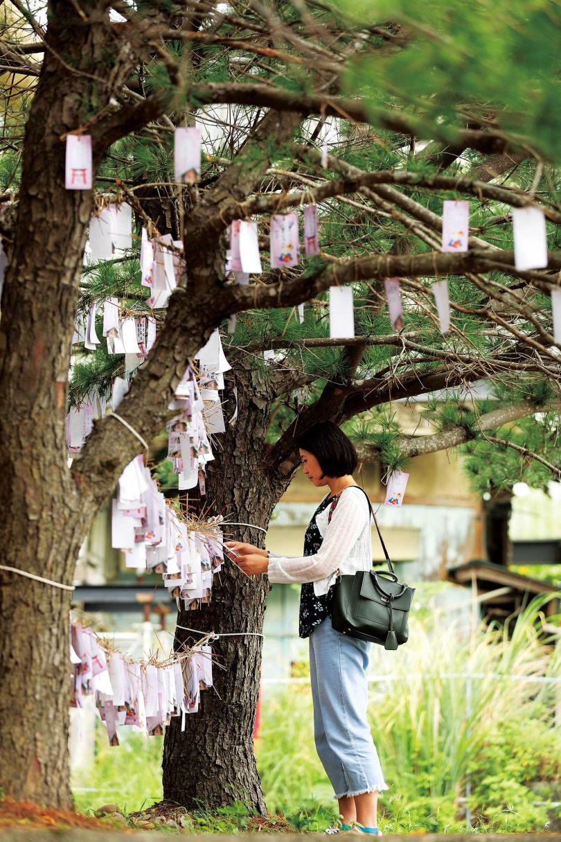 神社外有傳統日本祈願樹,洋溢日式風情。(圖/于魯光攝)