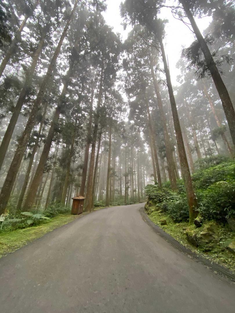 南投溪頭最大特色是可漫步於茶園與清幽竹林步道小徑上。(圖/雄獅提供)