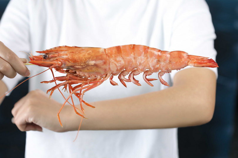 「手臂蝦」身長相當於一個成人的前手臂。(圖/Mega 50餐飲及宴會提供)