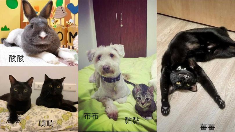 喜歡動物的宋城希,現在家中養有4貓、1狗、1兔。(圖/艾迪昇提供)