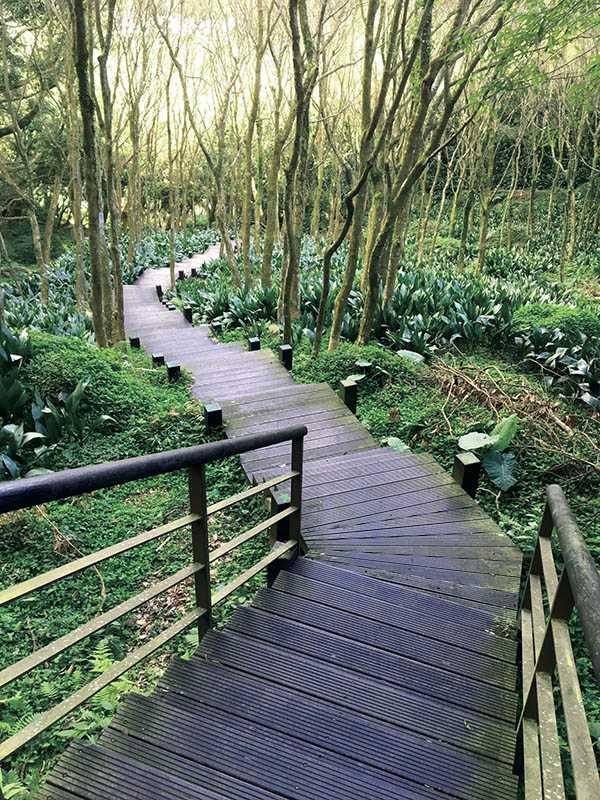 沿著木棧道散步,可觀賞高直楓林、地衣等豐富的生態景致。(圖/楊麗雯攝)