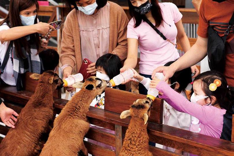 羊寶寶餵奶時間,是小朋友們最期待的活動。(圖/于魯光攝)
