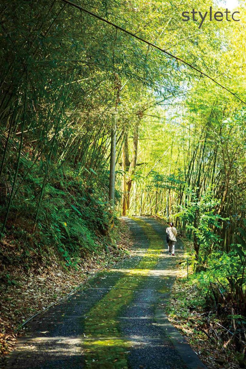 特富野步道沿途景致迷人,除了沿途的咖啡樹外,也有垂墜成拱的竹林夾道。(圖/林士傑攝)