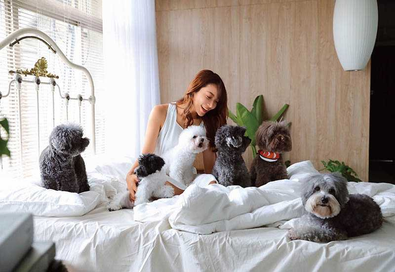 由於全家人都非常愛動物,依依家中最高紀錄共養了15隻貴賓狗,目前有6隻,熱鬧非凡。(右起:Happy、妹妹、黑妞、亮亮、小寶、冰冰)(圖/依依提供)