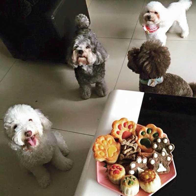 每年中秋節,依依都會舉辦狗聚,關心小狗送養後的狀況,並且準備點心給狗狗們享用。(右到左:妹妹、亮亮、Happy、咪咪)(圖/翻攝臉書)