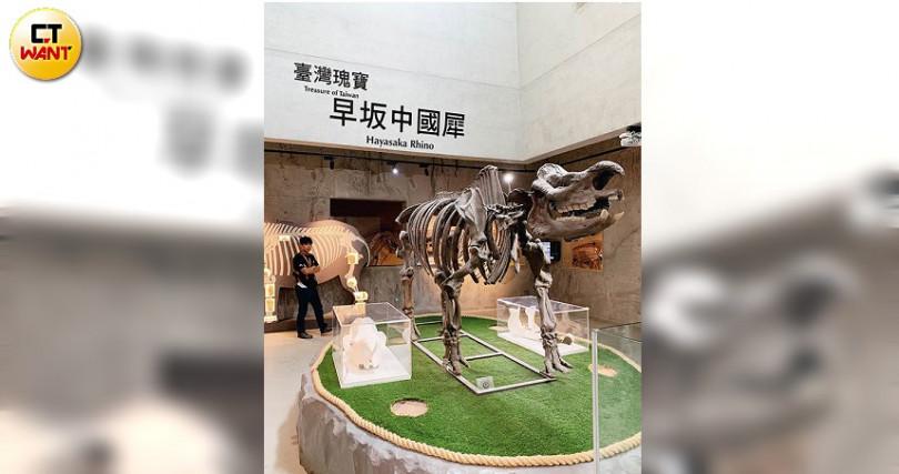 鎮館之寶「早坂中國犀」的命名由來,是為了紀念對化石研究有重大貢獻的早坂一郎教授。