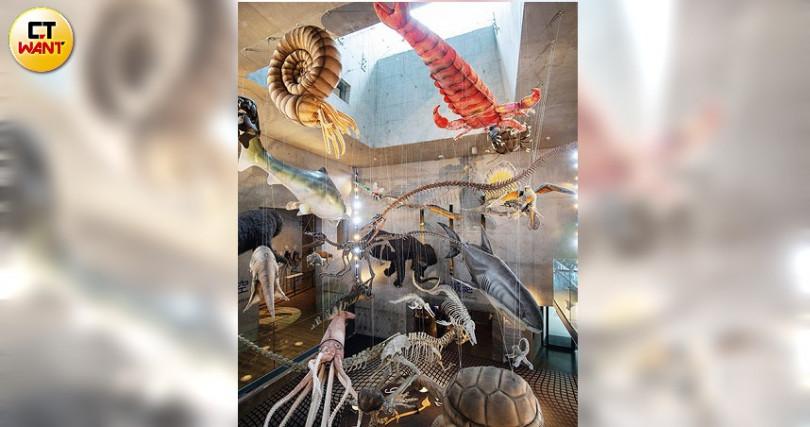 名為「演化的天空」天井裡,以絨毛布偶及生物骨架模擬出各時期關鍵物種。