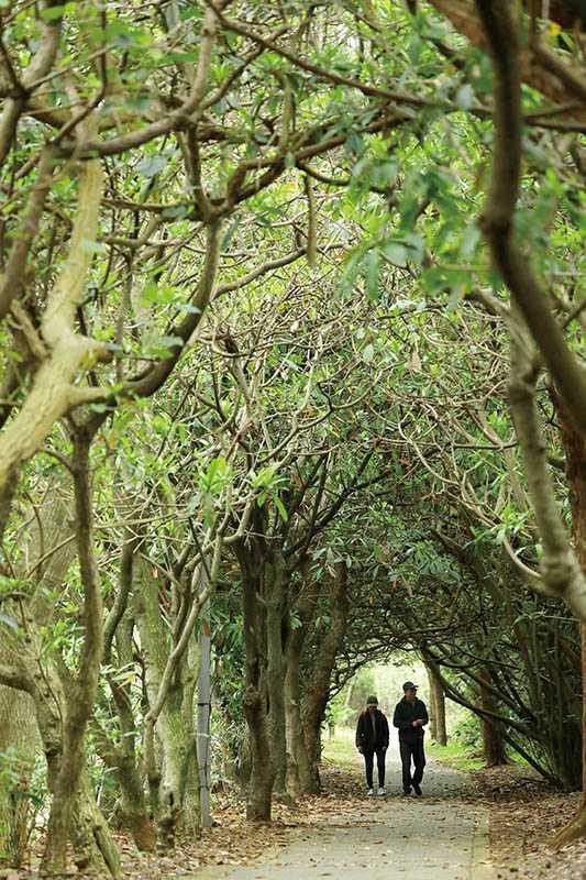 步道兩旁的樹木相互交疊纏繞,形成天然的綠色隧道。