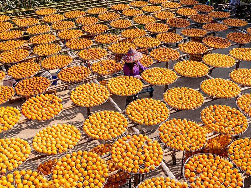 順遊新埔可體驗季節限定的柿餅客家文化。