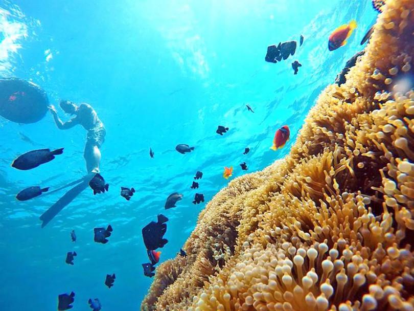 「深度浮潛水中攝影」@ 墾丁萬里桐