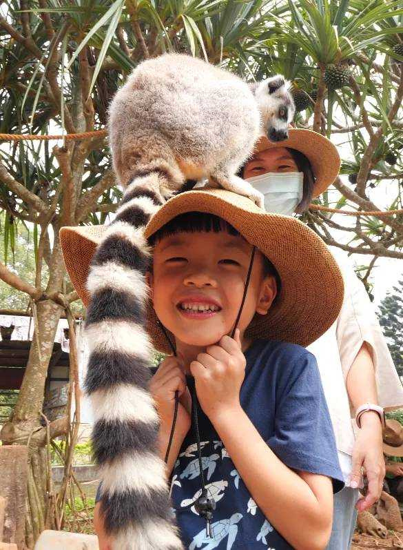 參加「非洲好朋友」,可以和狐猴和狐獴近距離互動。