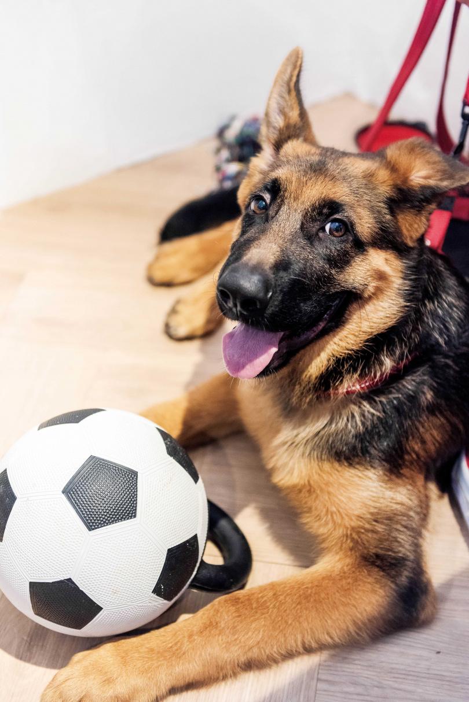 Wolfy相當活潑好動,尤其喜歡玩球或寶特瓶。(圖/張祐銘攝)
