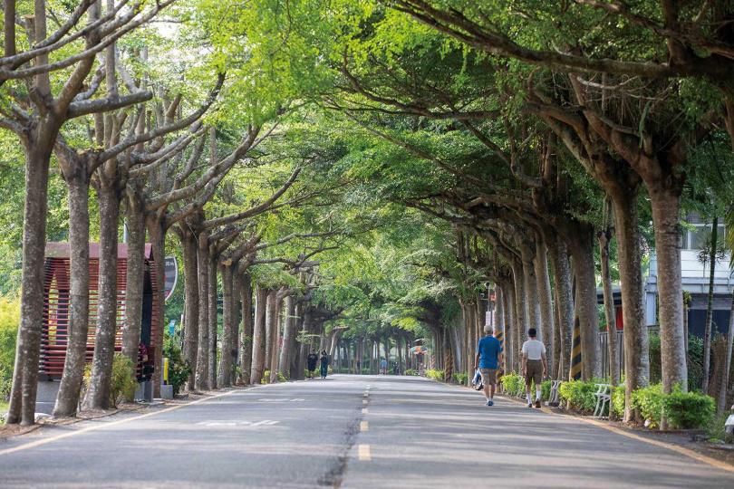 整排樹林綠蔭蔥蘢,適合一家大小來享受森林浴。(圖/宋岱融攝)