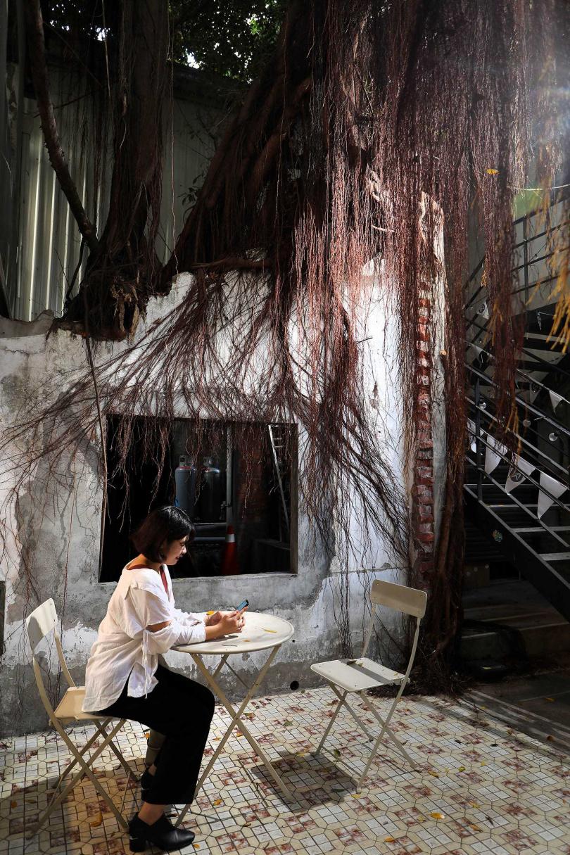 在颱風中倒塌卻仍展現生命力的老榕樹,見證了此地的歷史變遷。(圖/于魯光攝)