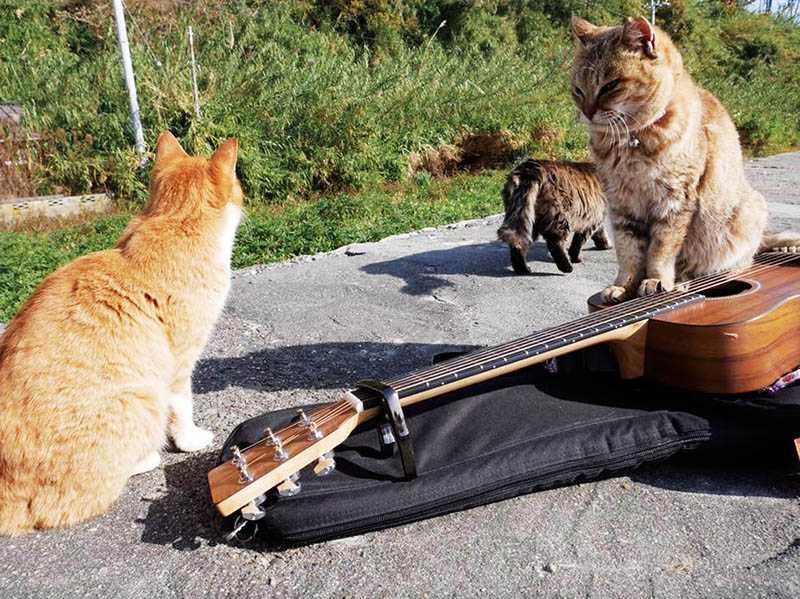 曾去日本愛媛縣青島旅遊的紀儀羚,對該處有兩百多隻流浪貓印象深刻,貓咪還爬上她的吉他。(圖/翻攝自紀儀羚臉書)