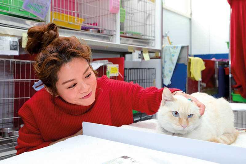 由於身上有狗狗的氣味,紀儀羚撫摸流浪貓的時候,貓咪的表情略顯不悅。(圖/施岳呈攝)