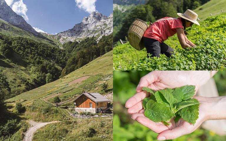 坐落於阿爾卑斯谷地的「克蘭詩純淨之巔」擁有得天獨厚的溫暖條件、最清新的空氣、潔淨的水源,阿爾卑斯清潔調理系列的『純淨溫和配方』植物來源就是取自於此。(圖/品牌提供)