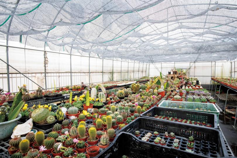 「掌上明珠善化植物園」是台南市數一數二的仙人掌與多肉植物園。(圖/宋岱融攝)
