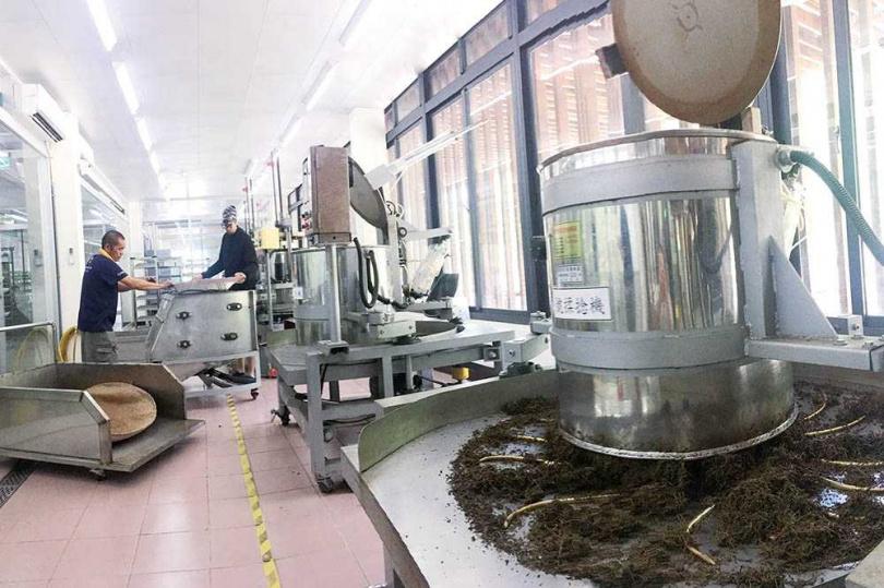 紅玉屬於中焙火茶葉,帶有淡淡的薄荷及蜜香。圖為日月潭紅茶廠以現代化設備製茶。(圖/報系資料庫)