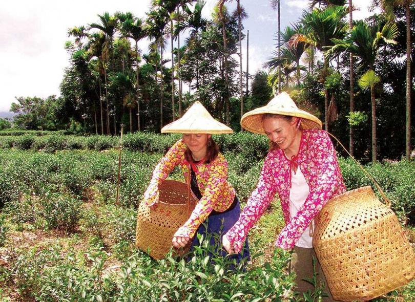 至少要在海拔1千公尺以上產的茶葉,才能稱為高山茶。圖為南投鹿谷鄉茶園。(圖/報系資料庫)
