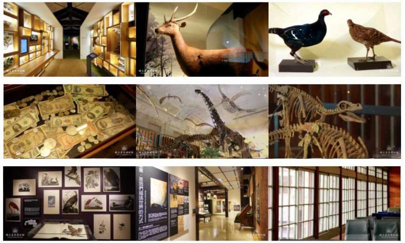 臺博館釋出台灣特有種、金融、鐵道、古生物等多種主題視訊背景美圖。(圖/國立臺灣博物館提供)