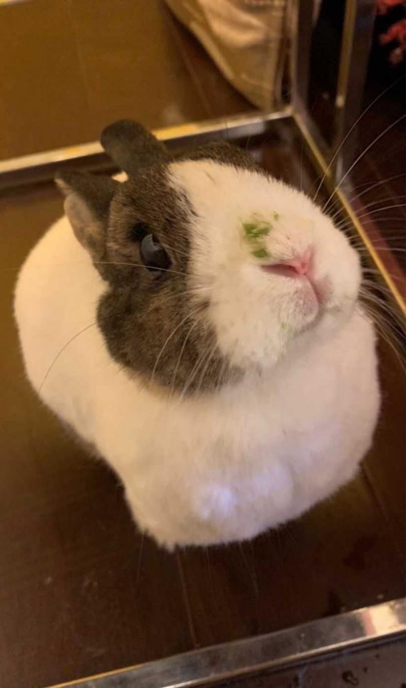 掰囉各位~~有緣下次見!別擔心,兔奴小編有幫我把鼻子擦乾淨XD