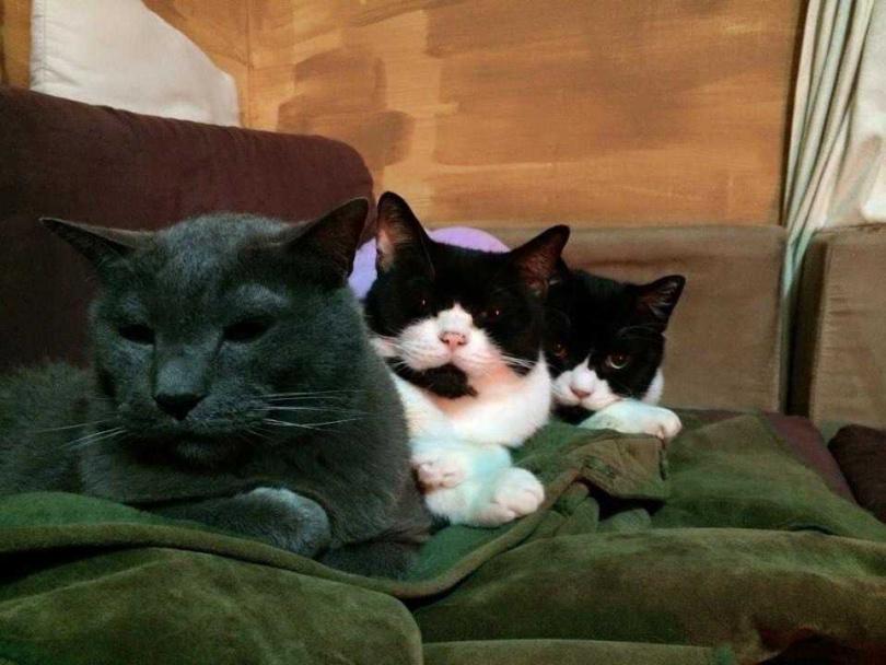 2016年家中的大頭(中)、小朋友(右)兩貓相繼離世,僅剩Bobo在身邊,貓兒們教會高慧君坦然面對父親的生離死別。(圖/艾迪昇提供)