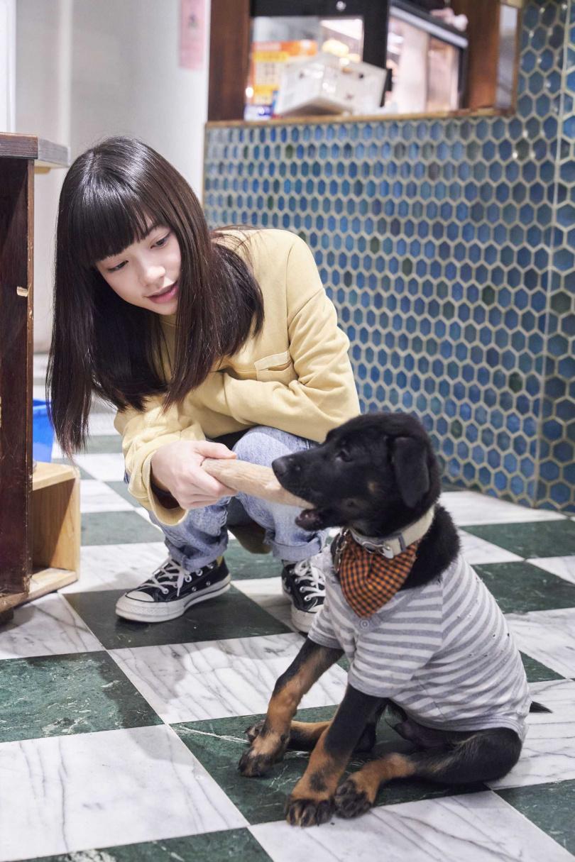 姚愛寗以行動支持愛護流浪動物,陪伴流浪動物,也希望牠們能找到自己的家。(圖/華研國際)