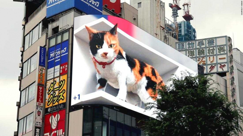 圖片來源:新宿東口の猫