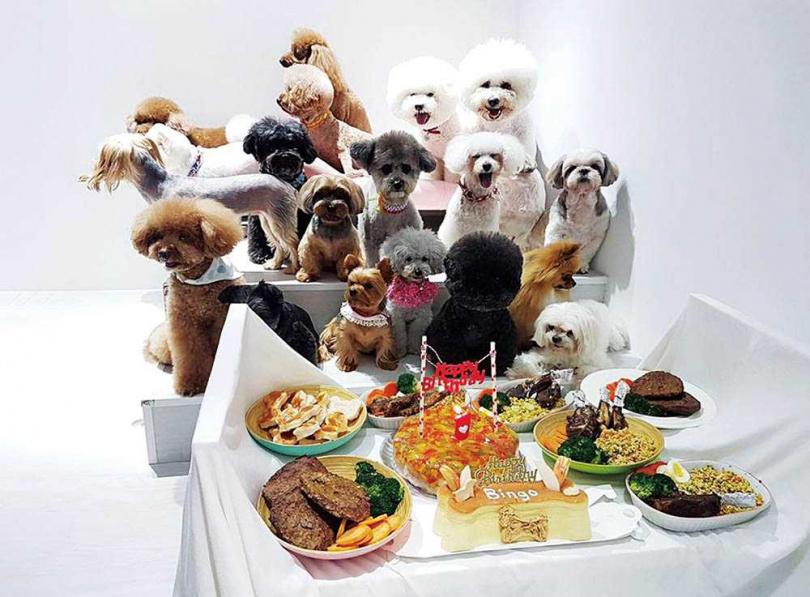 吳宗憲曾幫BINGO辦慶生趴,邀來許多狗朋友陪牠吃生日大餐。(圖/翻攝自吳宗憲臉書)