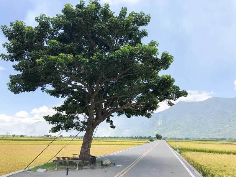 圖片來源:tour.taitung.gov.tw