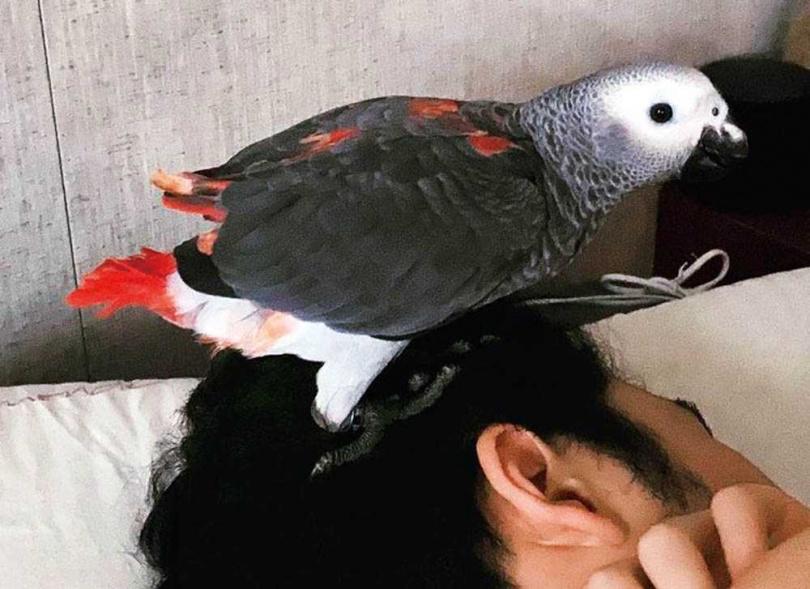 聰明的鸚兒,現在已學會聽鹿希派的口令才上廁所,家裡不再隨處有排泄物。(圖/容易文創提供)