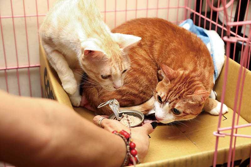 雖然家中貓口眾多、花費不少,但Amy表示動物帶給家人的快樂,無法用金錢衡量。(圖/戴世平攝)