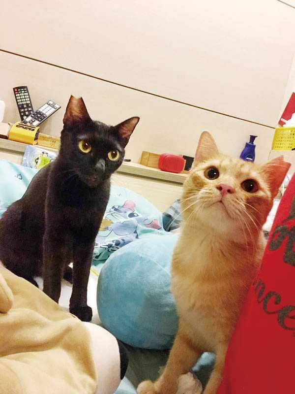 Amy在基隆虐貓案中,救出不少貓咪,圖為其中2隻,目前被好人家收養,過著幸福的生活。(圖/Amy提供)