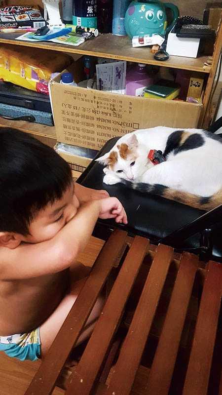 7歲大的兒子遺傳到Amy愛動物的基因,小小年紀就會跟著媽媽一同救援、照顧貓咪。(圖/Amy提供)