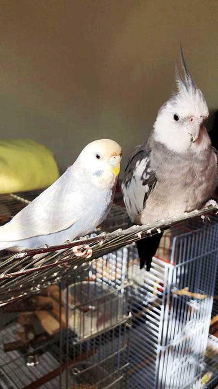 游書庭家中還有兩隻可愛的鳥寶貝小游(右)、芋圓(左)。(圖/艾迪昇提供)