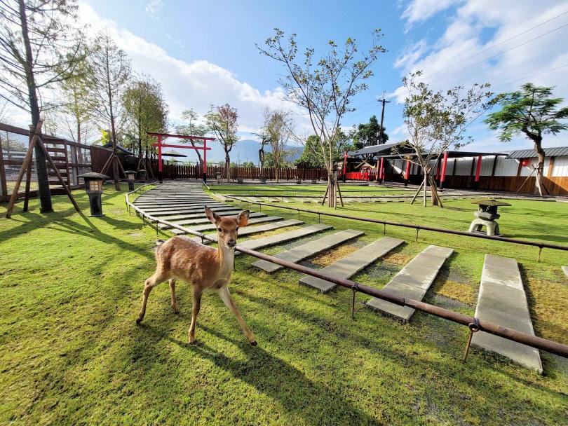 17隻可愛的小鹿等你來餵食。圖片來源:宜蘭ㄚ欣的美食日誌