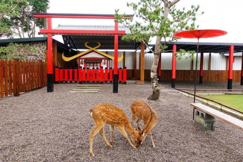 農場400坪的日式庭園,讓人一秒來到日本。圖片來源:宜蘭ㄚ欣的美食日誌