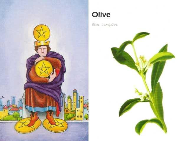 C 錢幣四+橄欖