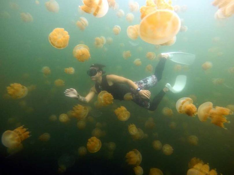 在帛琉特有的金色水母湖浮潛,是遊客到帛琉的熱門活動。