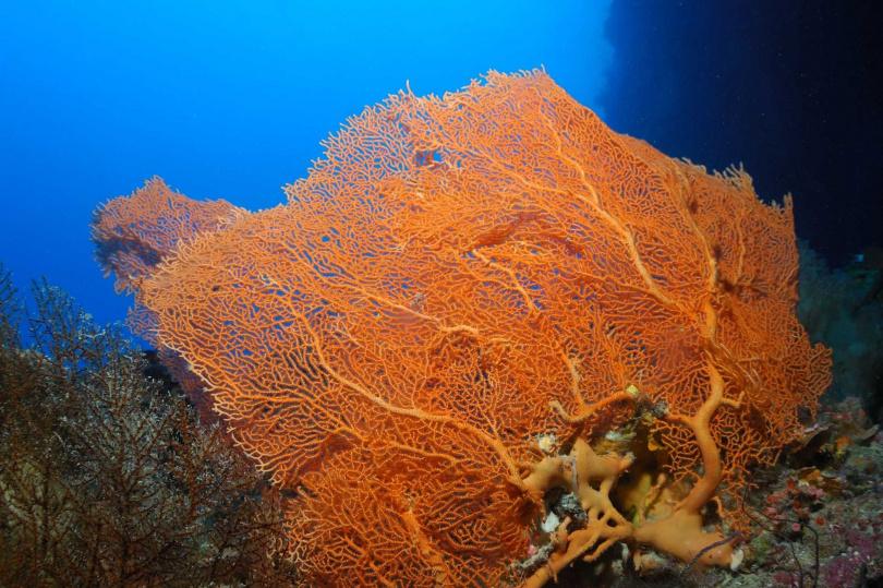 帛琉海域有豐富的海洋珊瑚生態。